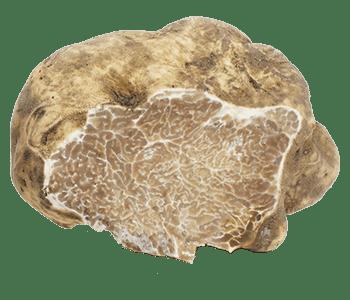 Tuber Magnatum Pico